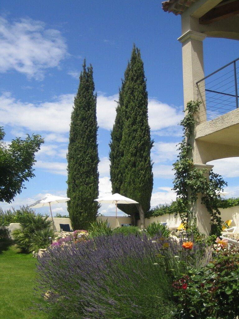 Zypressen Provence