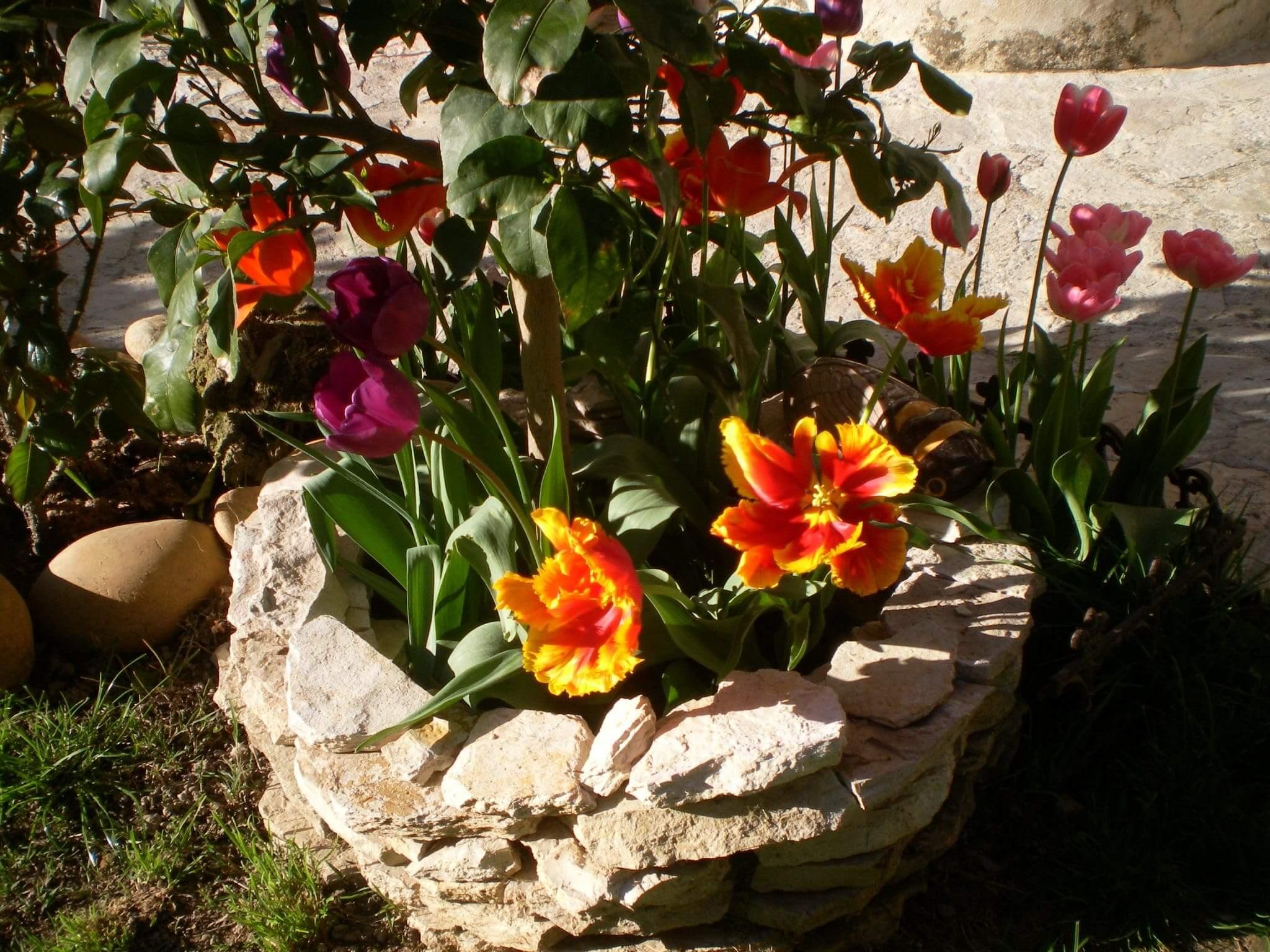 Blumen Provence