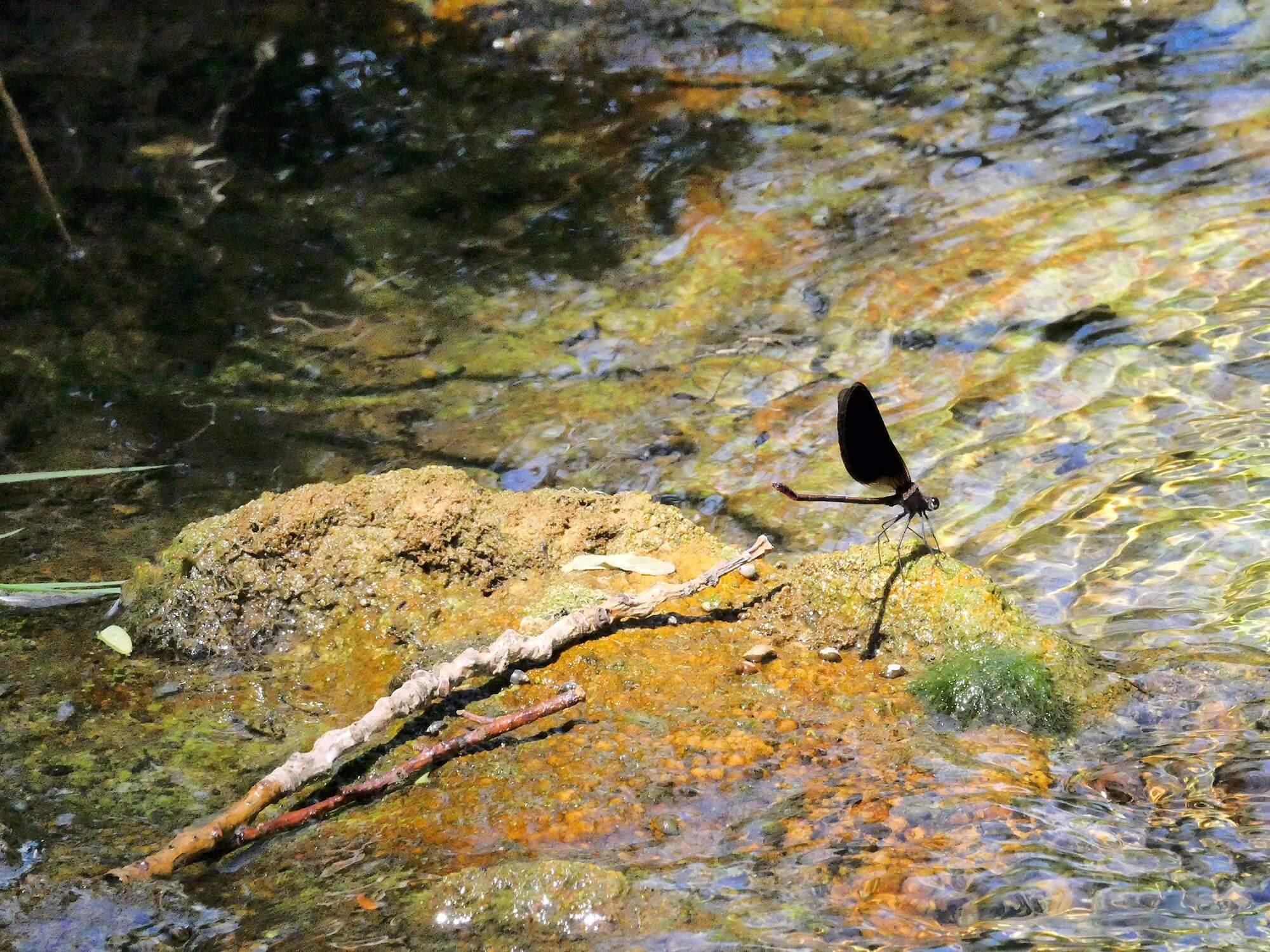 Provence Libelle