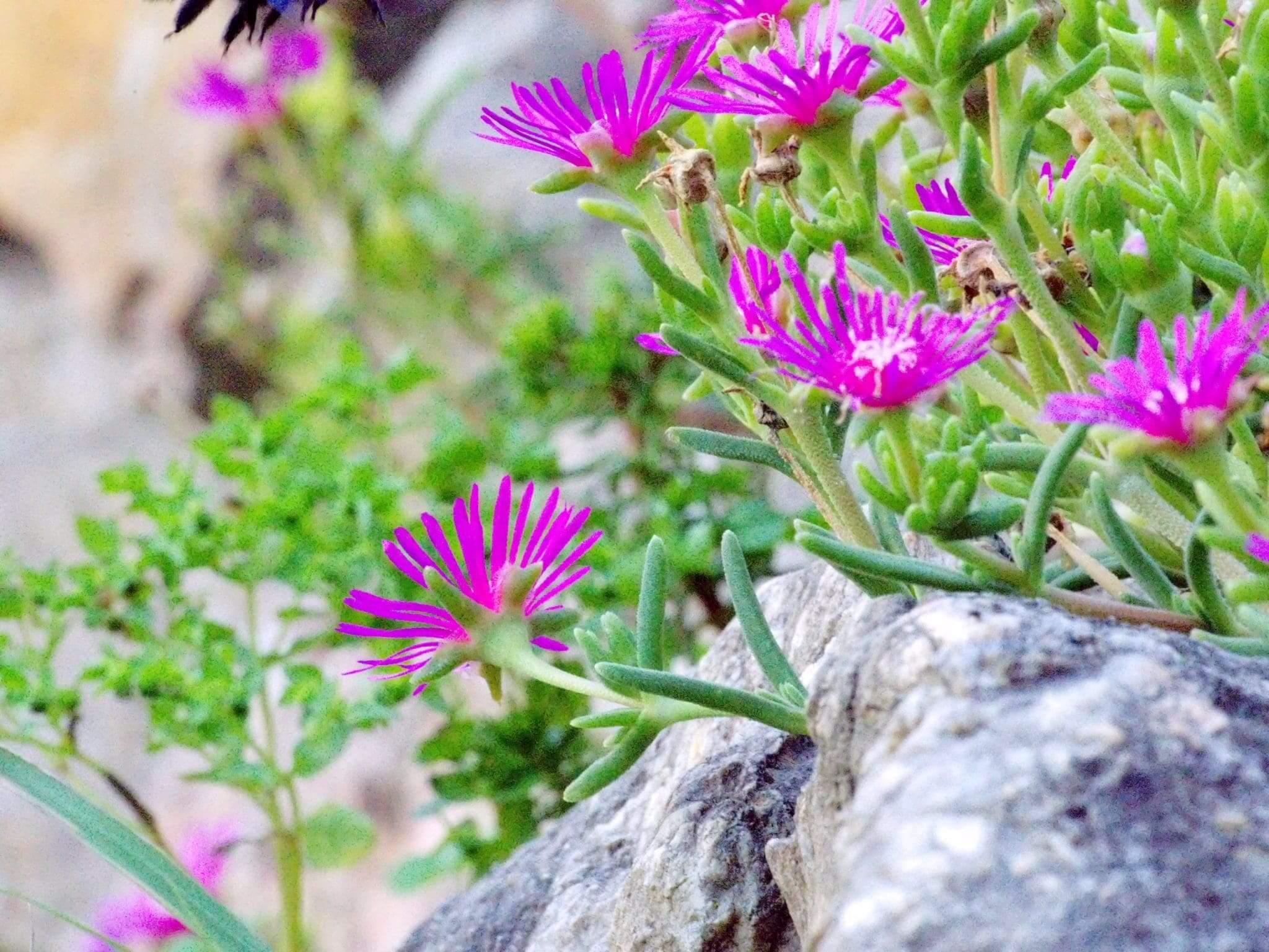 Provence Pflanzen